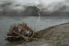 Beach Lightning. A picture of lightning striking a dead branch on a beach Stock Photos