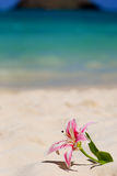 Beach Lily. Artificial stargazer lily on beach Royalty Free Stock Photography
