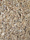 The beach is littered with shells and corals royalty free stock photos