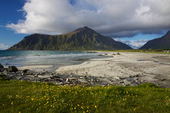 Beach on Lofoten Stock Images