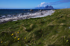 Beach on Lofoten islands Royalty Free Stock Image