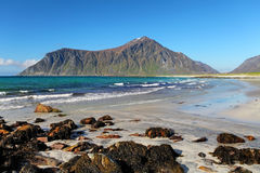 Beach on Lofoten islands in Norway Stock Photos