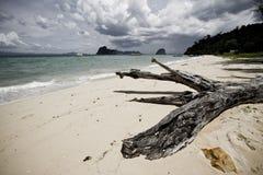 Beach log Royalty Free Stock Image
