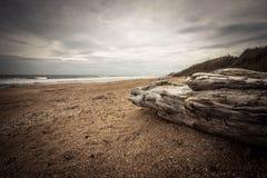 Beach Log Stock Image