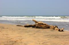 Beach log Royalty Free Stock Photo