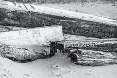 Beach Logs Stock Images