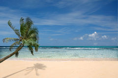 Beach With Lone Palm Tree. Undisturbed Paradise Beach in Kauai Hawaii With Clear Sky Royalty Free Stock Image