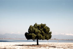 Beach with a lonely tree, Greece Royalty Free Stock Images
