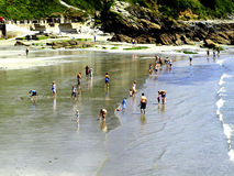 The beach at Looe, Cornwall. Families enjoying a paddle on the beach at low tide at Looe, South Cornwall, England, UK Stock Photos