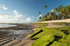 Beach Lords Lizenzfreie Stockbilder