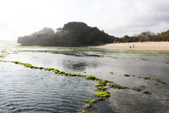 Beach with lot of green seaweed Royalty Free Stock Photo
