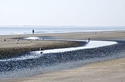 Beach at Low Tide. Sandy beach at low tide with seagulls and person walking Stock Photos