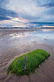 Beach at low tide during a cloudy sunset. A beach in St Andrews, Scotland, at sunset. Low tide, with dramatic clouds in the sky and rock covered with seaweed in Stock Image