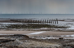 Beach at low tide with windmills. Windfarm seen from the beach with groyne. Walney island Royalty Free Stock Image