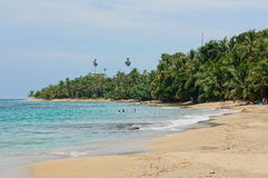 Beach with lush tropical vegetation in Costa Rica. Beach with beautiful tropical vegetation on the Caribbean coast of Costa Rica, Punta Uva, Puerto Viejo de Royalty Free Stock Photos