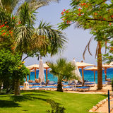 Beach at the luxury hotel, Sharm el Sheikh, Egypt Royalty Free Stock Image