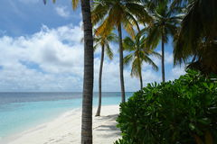 Beach on a Maldive Island. With coconut trees stock photography