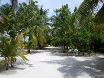 Beach. On the Maldives Stock Photos