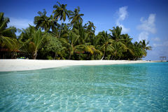Beach in the Maldives. Beautiful beach in the Maldives Island Royalty Free Stock Images