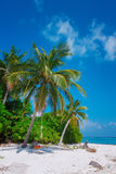 Beach at Maldives island Fulhadhoo with white sandy idyllic perfect beach and sea and curve palm Royalty Free Stock Image