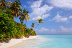 Beach at Maldives island Fulhadhoo with white sandy idyllic perfect beach and sea and curve palm. Scenic view of Wild idyllic Beach at Maldives island Fulhadhoo stock photos