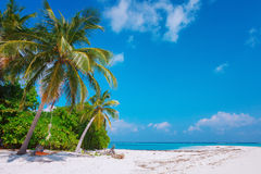 Beach at Maldives island Fulhadhoo with white sandy idyllic perfect beach and sea and curve palm. Scenic view of Wild idyllic Beach at Maldives island Fulhadhoo stock image