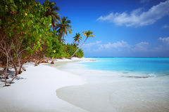 Beach at Maldives island Fulhadhoo with white sandy idyllic perfect beach and sea and curve palm. Scenic view of Wild idyllic Beach at Maldives island Fulhadhoo royalty free stock images