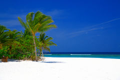 Beach on Maldives with palm tree. Beautiful beach on Maldives with white sand and coconut palm tree Royalty Free Stock Image