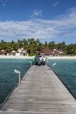 Beach in the Maldives. Paradisiacal landscape tropical beach in the Maldives Stock Photography