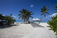 Beach in the Maldives. Paradisiacal landscape tropical beach in the Maldives Stock Image