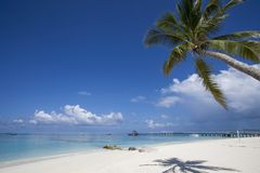 Beach in the Maldives. Paradisiacal landscape tropical beach in the Maldives Royalty Free Stock Image