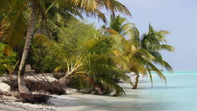 Beach in the Maldives. Sandy beach in the Maldives in the Indian Ocean royalty free stock photography