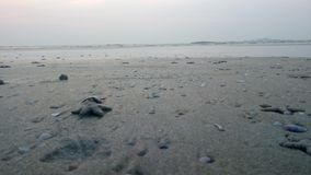 The beach. This is malpe beach Royalty Free Stock Photography