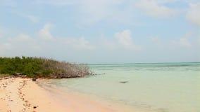 Beach with mangrove stock footage