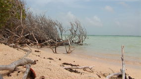 Beach with mangrove stock video footage