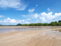 Beach with mangrove tree Royalty Free Stock Image