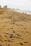 Beach with many dead fish Stock Photo