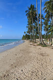 Beach in Maragogi, Alagoas - Brazil Royalty Free Stock Image