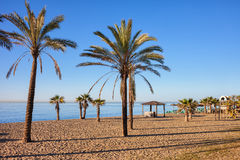 Beach in Marbella on Costa del Sol in Spain. Spain, Marbella, beach with palm trees in resort city on Costa del Sol at Mediterranean Sea stock photos