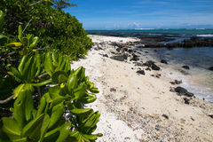 Beach in Mauritius. Beach with sand and rocks at the small Island Ilot des deux Cocos in Mauritius Stock Photography