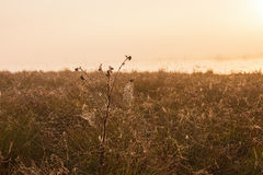 Beach meadow with morning dew Royalty Free Stock Images