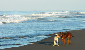 On the beach - Mexico Stock Photo