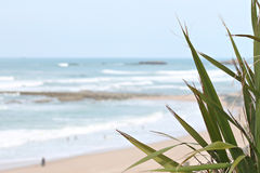 Beach Milady in Biarritz Stock Images