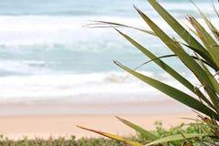 Beach Milady in Biarritz Stock Photos