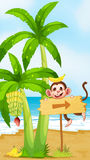 A beach with a monkey near the banana plant Royalty Free Stock Photos