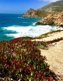 Beach at Montara california. Beach plants search ocean Blue sky mountain royalty free stock image