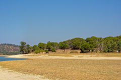 Maquis shrubland on the beach of Montargil lake, Portalegre, Portugal Stock Photography