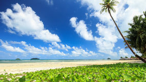 Beach with Morning Glory. Koh Chang Island in thailand Stock Photography
