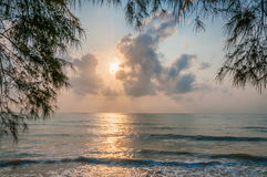 Beach at the morning. Moring at the beach tree branch at foreground Stock Image