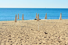 Beach in the morning with solitary birds Royalty Free Stock Photos